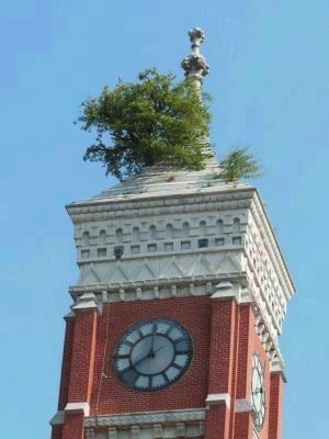 Mulberry Tree in the Clock Tower image. Click for full size.