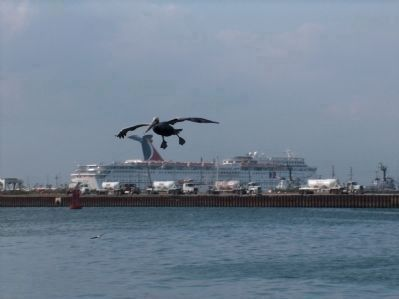 Brown Pelican, landing gear down, Carnival Fantasy in the background image. Click for full size.