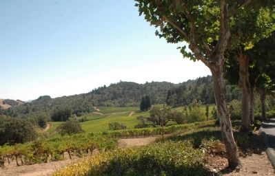 Mt. La Salle Vineyards image. Click for full size.
