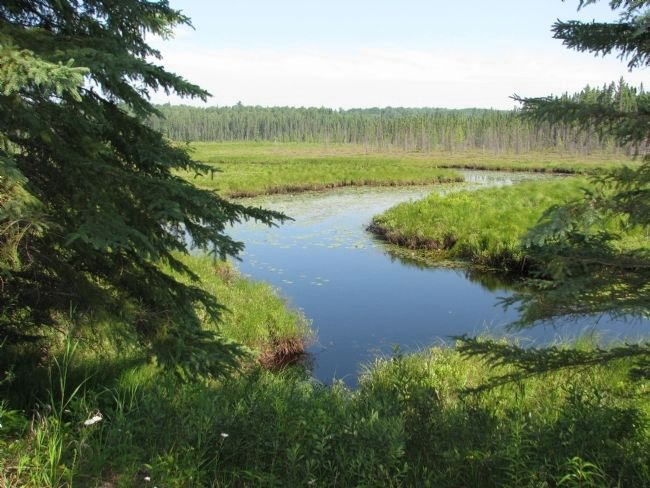 Spruce Bog Trail image. Click for full size.