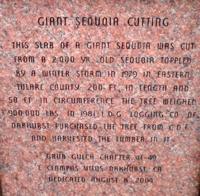 Giant Sequoia Cutting Marker image. Click for full size.