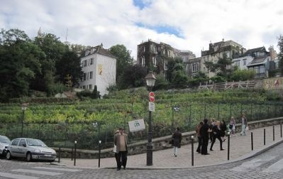 The last, and only, vineyard in Montmartre image. Click for full size.