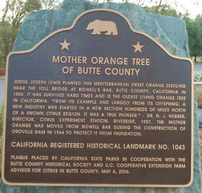 Mother Orange Tree of Butte County Marker image. Click for full size.