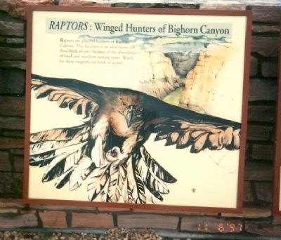 Raptors: Winged Hunters of Bighorn Canyon Marker image. Click for full size.