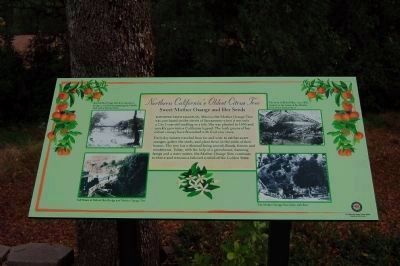 Northern California's Oldest Citrus Tree Marker image. Click for full size.