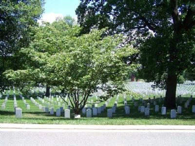 American Ex-Prisoners of War Marker and Kousa Dogwood Memorial Tree image. Click for full size.
