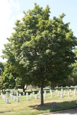 The Tuskegee Airmen of World War II Marker and Sugar Maple Memorial Tree image. Click for full size.