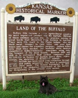Land of the Buffalo Marker image. Click for full size.