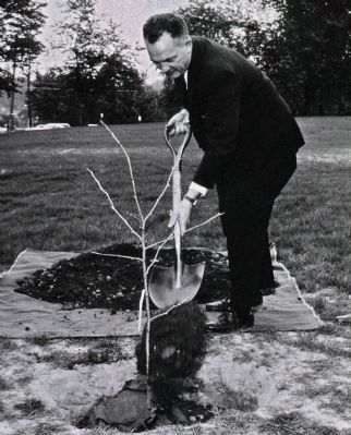 Tree of Hippocrates Planted 1961 image. Click for full size.