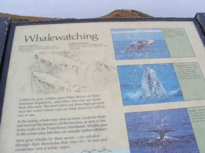 Whalewatching Marker image. Click for full size.