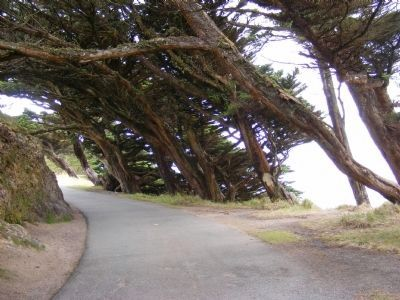 A Trail Overlooking the Pacific Ocean image. Click for full size.