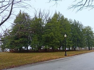 Grove of Holly Trees growing over the remains of Fort Nonsense image. Click for full size.