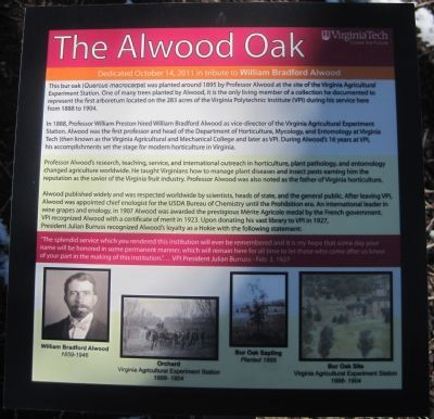 The Alwood Oak Marker image. Click for full size.