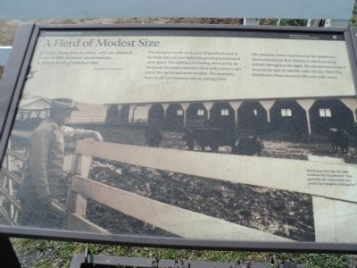 A Herd of Modest Size Marker image. Click for full size.