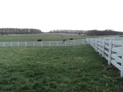 Cows at the Eisenhower Farm image. Click for full size.