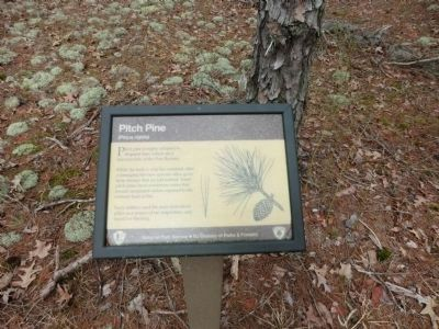 Pitch Pine Sign image. Click for full size.