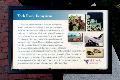 York River Ecosystem Marker image. Click for full size.