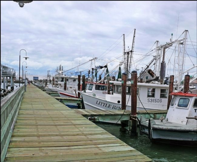 Shrimp Boats Docked at Pier 20 image. Click for full size.