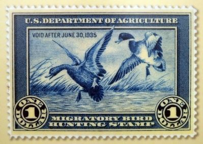 Federal Duck Stamp image. Click for full size.