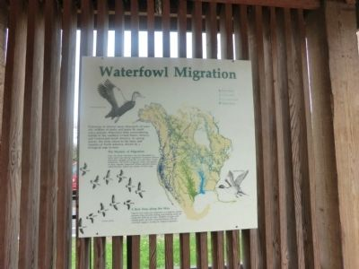 Waterfowl Migration Marker image. Click for full size.