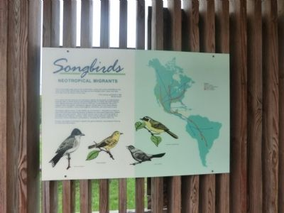 Songbirds Marker image. Click for full size.