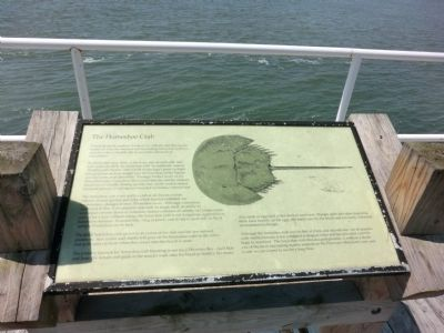The Horseshoe Crab Marker image. Click for full size.