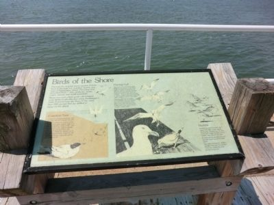 Birds of the Shore Marker image. Click for full size.