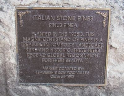 Italian Stone Pines Marker image. Click for full size.