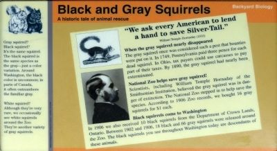 Black and Gray Squirrels Marker image. Click for full size.