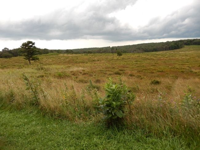 Big Meadow as seen from Harry F. Byrd, Sr. Visitor Center image. Click for full size.