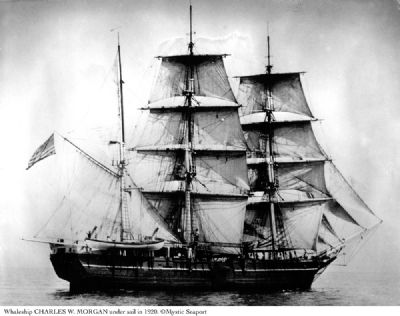 Charles W. Morgan under sail in 1920 image. Click for full size.