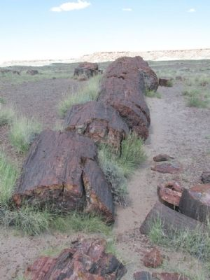 Petrified Log image. Click for full size.