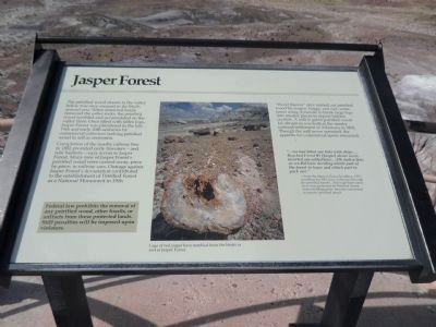 Jasper Forest Marker image. Click for full size.