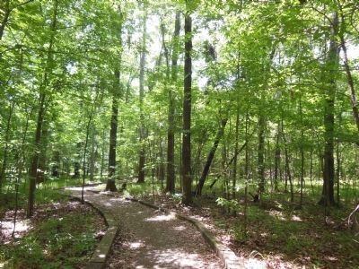 William Bartram Arboretum Trail image. Click for full size.
