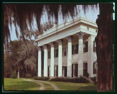 Millford Plantation image. Click for full size.