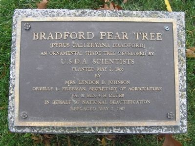 Bradford Pear Tree Marker image. Click for full size.