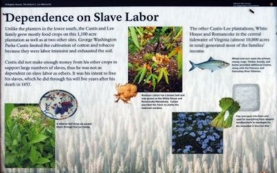 Dependence of Slave Labor Marker image. Click for full size.