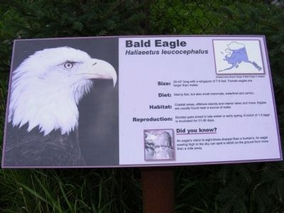 Our Living National Symbol Marker-Bald Eagle image. Click for full size.