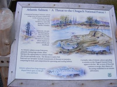 Atlantic Salmon-A Threat to the Chugach National Forest? Marker image. Click for full size.