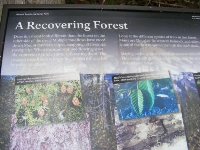 A Recovering Forest Marker image. Click for full size.
