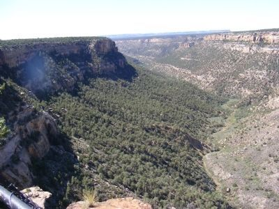 Mesa Verde Canyon image. Click for full size.