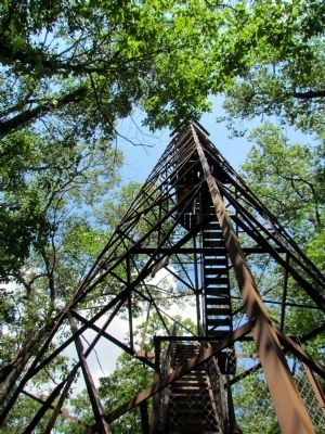 View from the Base of the Fire Tower image. Click for full size.