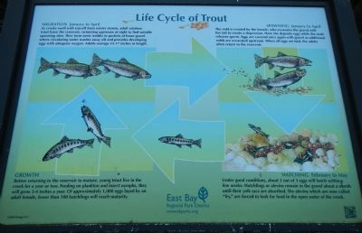 Life Cycle of Trout image. Click for full size.
