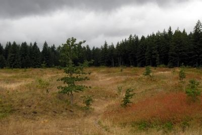 Mima Mounds image. Click for full size.