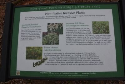 Non-Native Invasive Plants image. Click for full size.