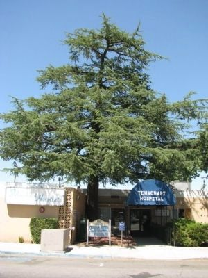 Tehachapi Hospital Trees image. Click for full size.