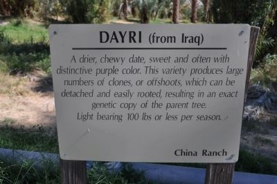 Dayri (from Iraq) image. Click for full size.
