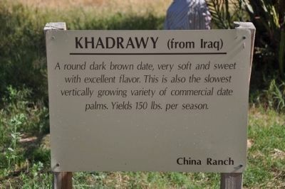 Khadrawy (from Iraq) image. Click for full size.