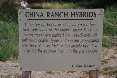 China Ranch Hybrids image. Click for full size.