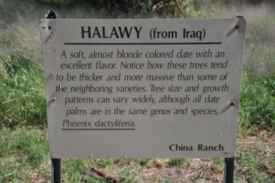 Halaway (from Iraq) image. Click for full size.